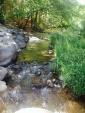Oak Creek AZ